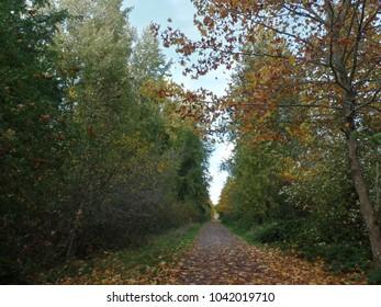autumn on the chehalis western trail