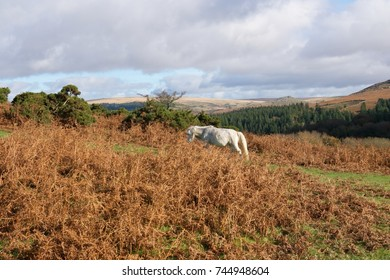 Autumn on Dartmoor for Pony