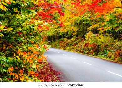 Autumn on road along with yellow red orange green maple leaves in autumn season the trees on both side turn colorful on path road way in season change, in Japan Tohoku forest.