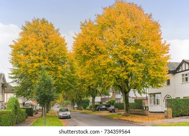 Autumn on a street in a city