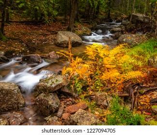 Autumn orange ferns beside a stream