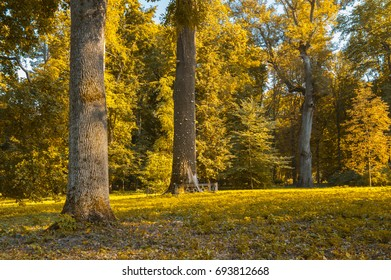 Autumn orange forest with strong vegetation, no people. Shot on a sunny, peaceful day.