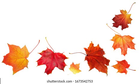 Autumn orange  leaves falling down Isolated on white background
