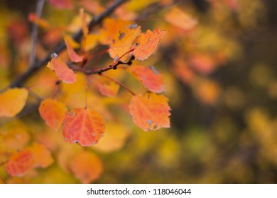 Autumn orange leaves in a forest, shot wide open