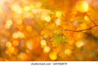 Autumn orange leaves over blurred sky, autumn nature background with bokeh
