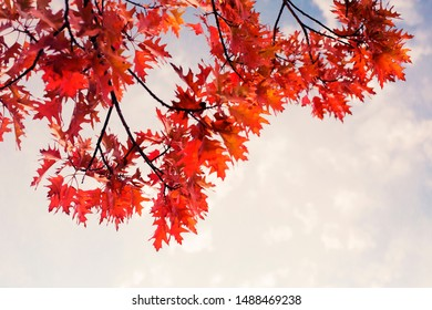 Autumn  orange leaves over sky/autumn nature background