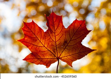 Autumn Orange Maple Leaf With Bokeh Background 1