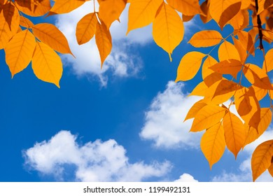 Autumn orange vivid leaves over blue sky with white clouds
