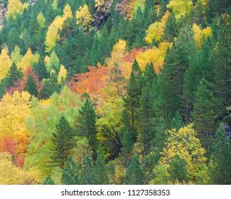 Autumn in Ordesa National Park, Pyrenees, Huesca, Aragon, Spain.