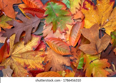 Autumn organic composition. Golden, green, yellow, orange and brown leaves and acorns gathered in the park, hello autumn concept, background and copy space, fall mockup