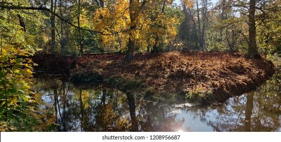 Autumn panorama nature