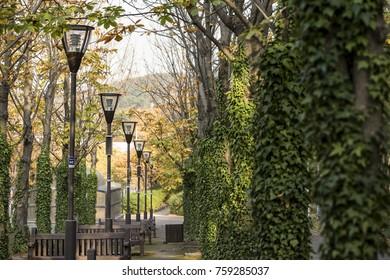 autumn and park