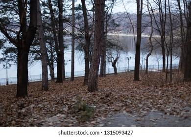 Autumn park along lake. The beautiful fall landscape.