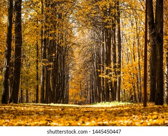 Autumn park. Beautiful romantic alley in park with colorful trees and sunlight. Autumn natural background. Falling foliage, fall trail landscape. Copy space for text