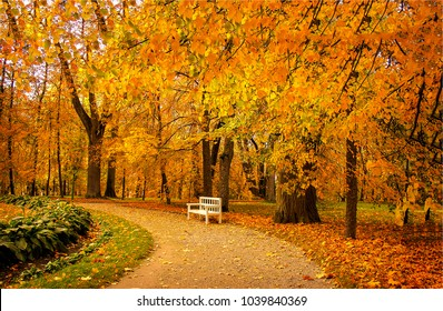 Autumn park bench. Tree alley in fall background
