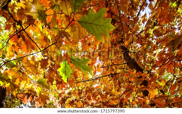 Autumn in the park. Colorful tree foliage in October in the Northern hemisphere.