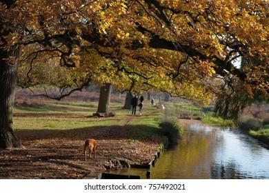autumn in the park dog walk