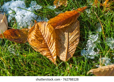 Autumn in the park, the first snow, the leaves in the snow. Red yellow leaves of autumn