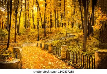 Autumn park forest bridge landscape. Forest park bridge in autumn. Autumn park forest bridge view