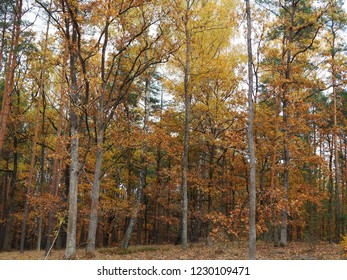 Autumn park or forest landscape