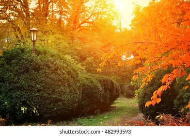 Autumn park, garden, plants with yellow branches and evergreens. Sunny bright light of the setting sun.