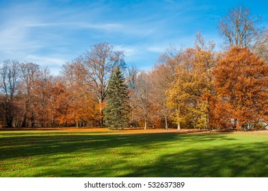 Autumn park with green grass and colorful trees in sunny weather