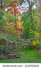 Autumn park landscape with overturned tree after storm