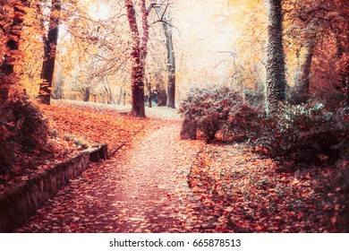 Autumn park landscape with path,trees, Beautiful foliage and sun shine,  outdoor fall nature background