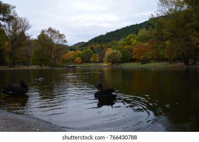 autumn in the park with many fallen leaves on the shore of a large lake reflected in it