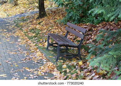 Autumn in the park / Maple leaves lie on a bench