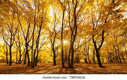 Autumn Park. Moscow
