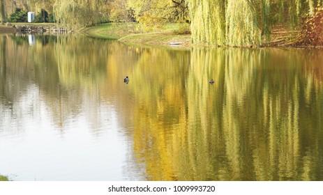 Autumn park, the pond - beautiful autumn landscape