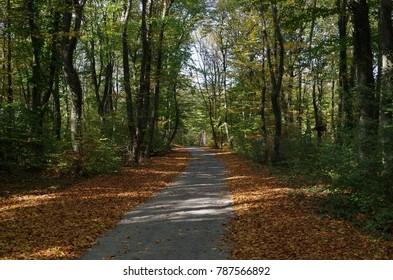 Autumn park road, Shumen Bulgaria