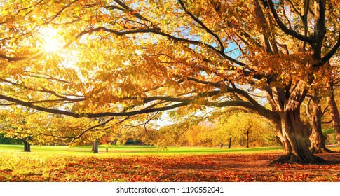 Autumn in a park, the sun shining through the leaves of a big tree unto the meadow
