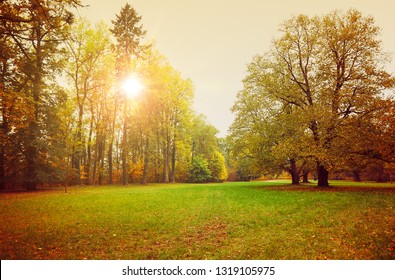 Autumn park with sunny glade and big old oak. Picturesque landscape green lawn.