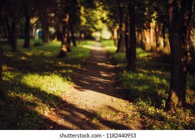 Autumn Park. Sunset