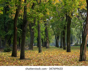Autumn park with trees and carper from yellow leaves