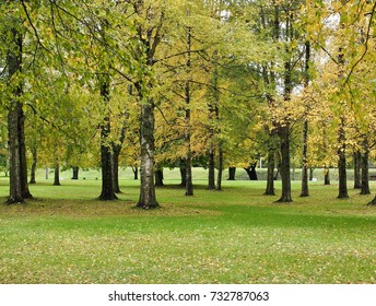 Autumn park with trees and leaves on the grass. Season changes, life changes. Rainy day without sunshine.