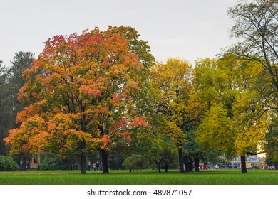 Autumn in the park. Autumn trees. Orange leaves in autumn
