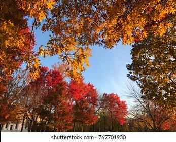 Autumn park in Washington