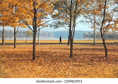 autumn park with yellow foliage and man