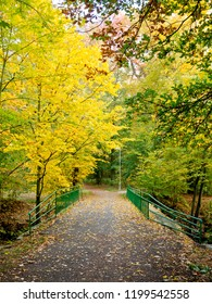 A autumn path with bridge in a forest