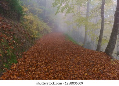 Autumn path in the fog
