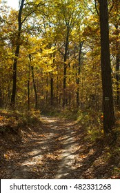 autumn path in a forest