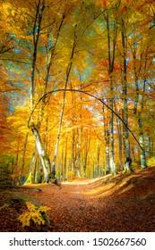 Autumn path in golden forest - autumnal season landscape