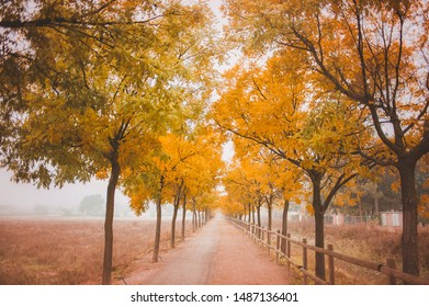 autumn path orange trees background