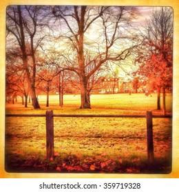 Autumn in Peckham Rye park