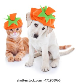 Autumn pet puppy dog and kitten cat together dressed up and wearing Fall pumpkin hat costumes for Thanksgiving and Halloween trick or treat