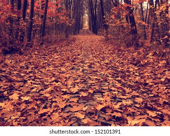 autumn picture of fallen leaves on a path across the wood, vintage colored