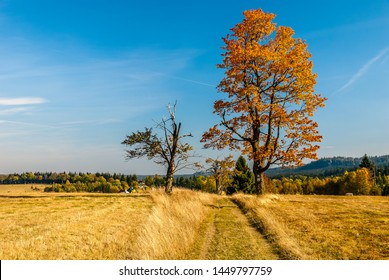 Autumn in Poland - colorful fields and trees in Stołowe Mountains in Lower Silesia - Dolny Slask Region in Karlow, Poland